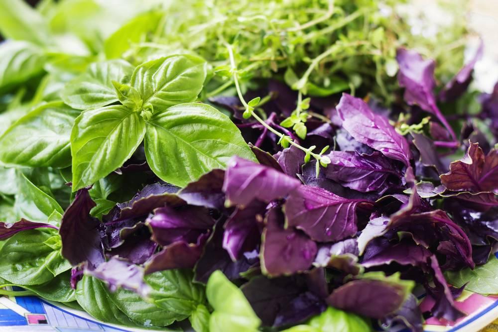 «царская трава» или зеленый базилик: что это такое, как его выращивать и другая полезная информация