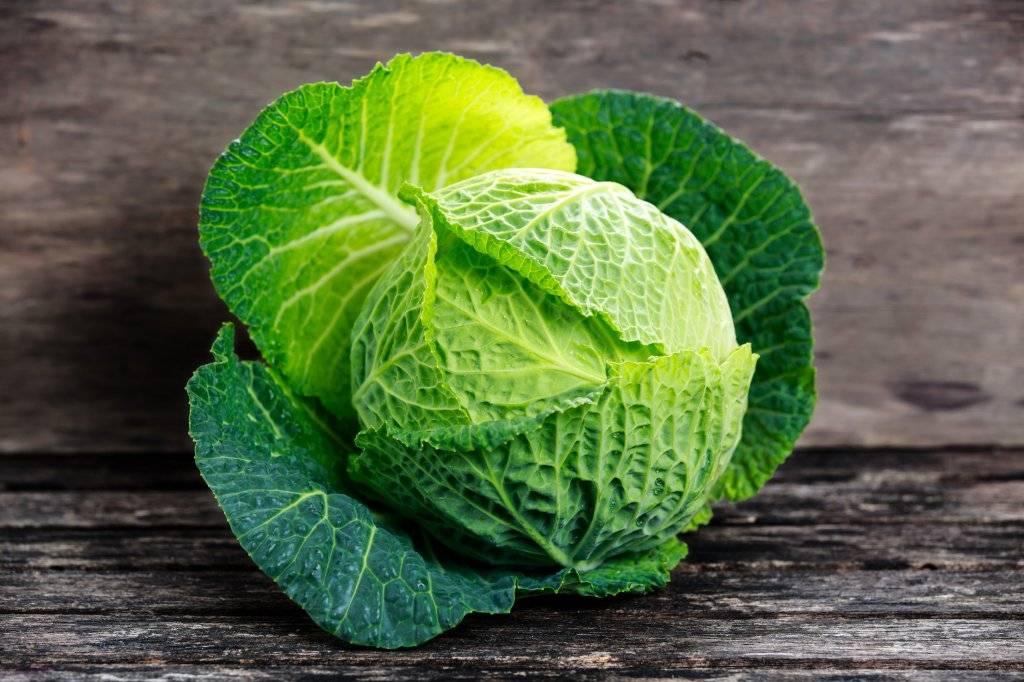 Савойская капуста: польза и вред для здоровья, фото, применение полезных свойств в кулинарии и косметологии