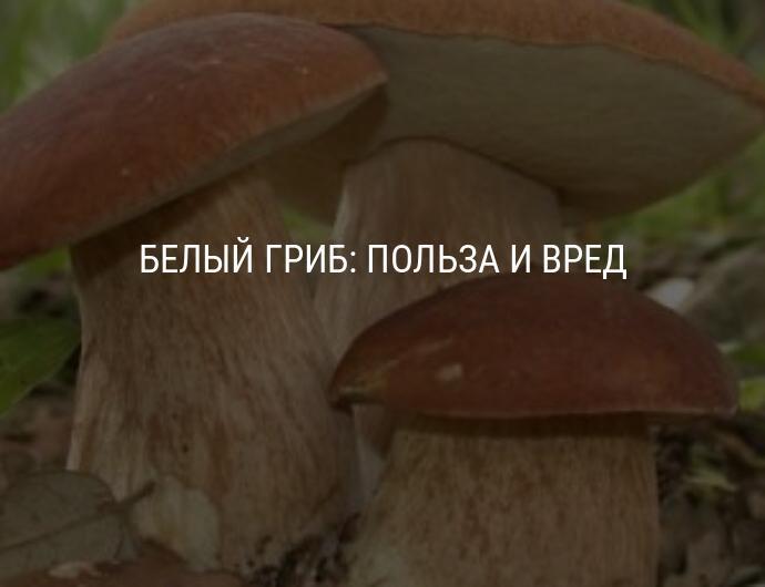 Польза грибов для организма человека – универсальные борцы с раком