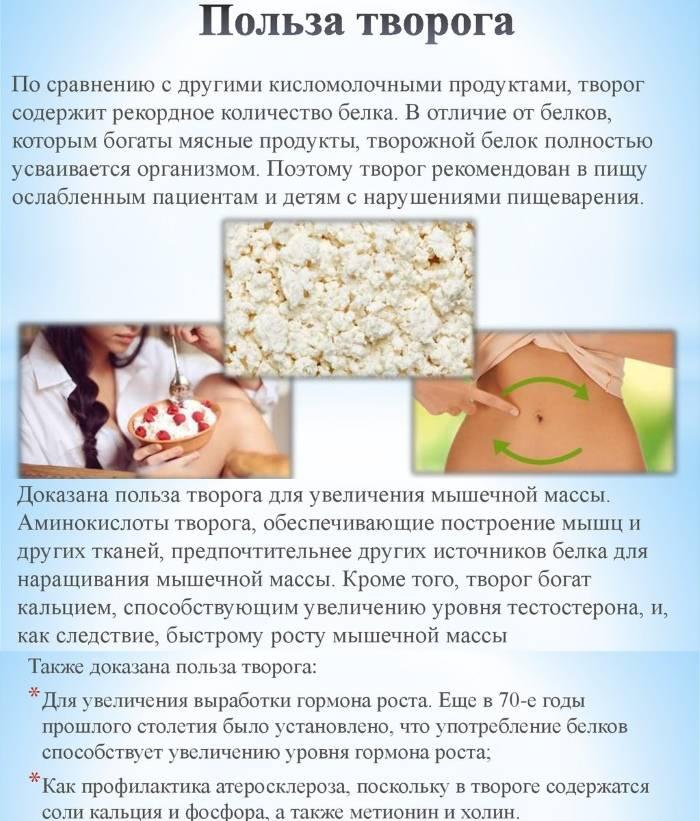 Польза творога для печени