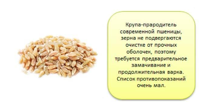 Полба – описание злаковой культуры, полезные свойства и противопоказания