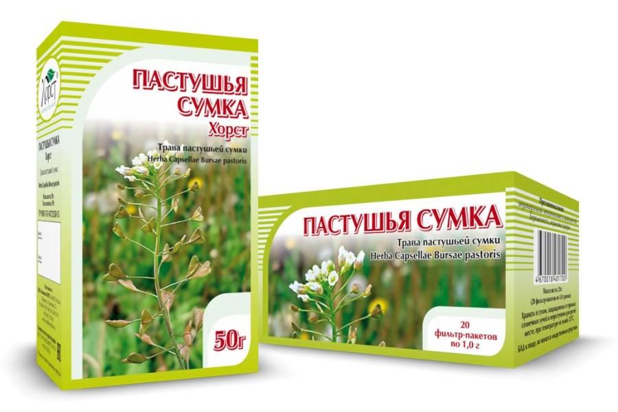 Пастушья сумка: лечебные свойства травы и противопоказания к употреблению