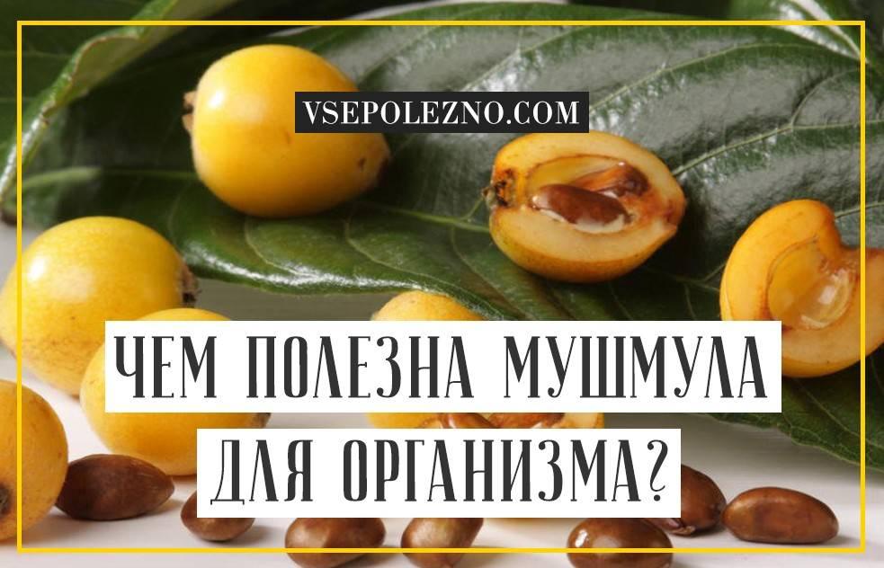 Чем полезна мушмула для организма?