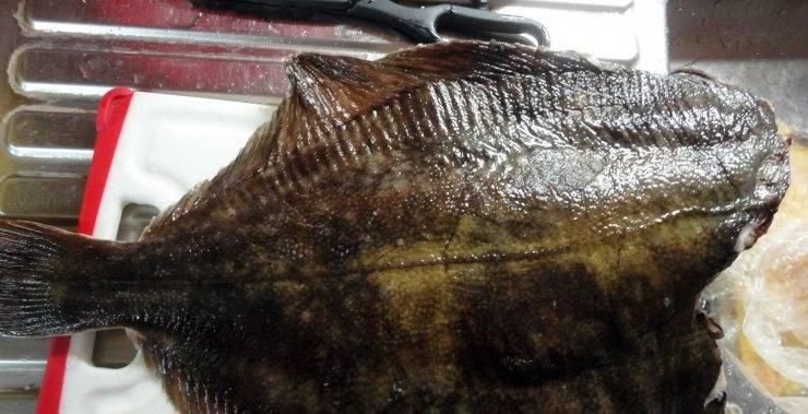Рыба камбала: все о ее пользе и вреде, ценности и вкусных рецептах