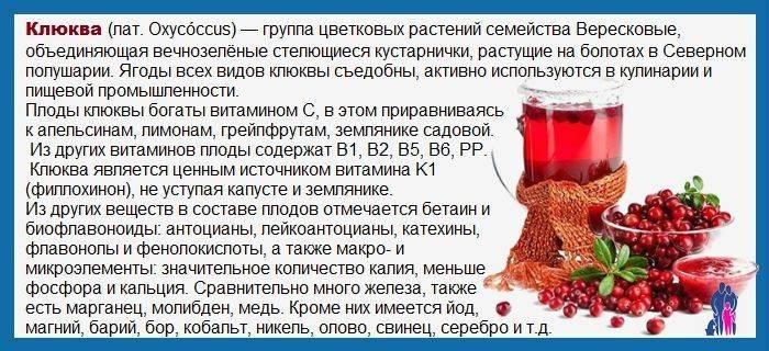 Клюква: польза и вред для здоровья, лечение соком из ягод