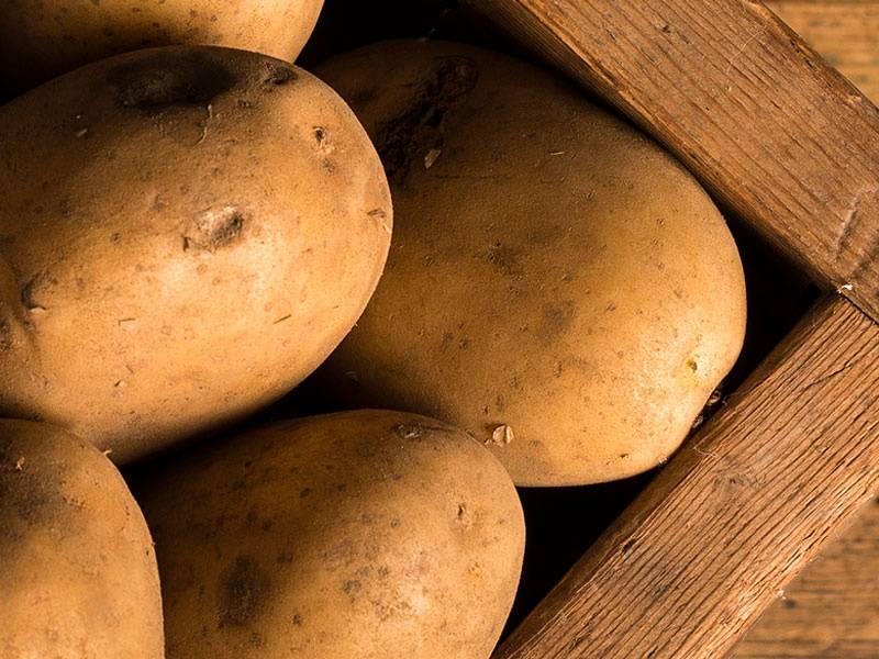 Зеленая картошка: насколько она безопасна для организма