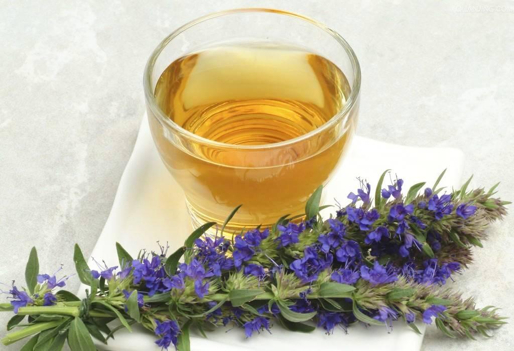 Иссоп — лечебные свойства и противопоказания, польза и вред травы