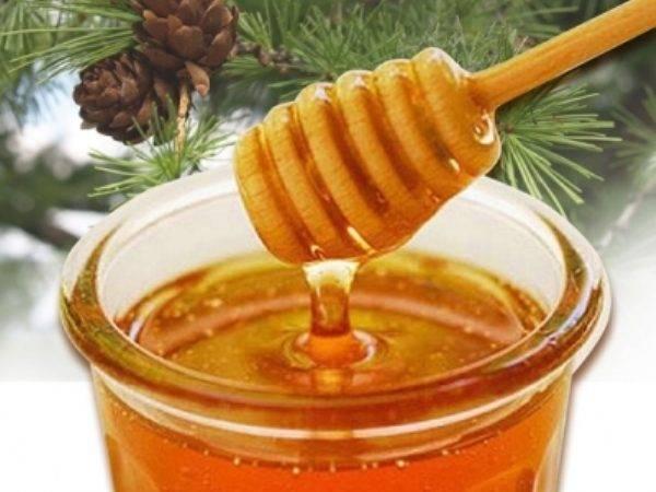 Король всех видов меда — лесной мед. полезные свойства и противопоказания использования лесного меда