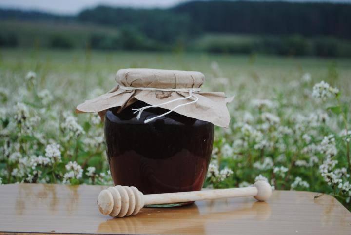 Польза гречишного меда для детей и взрослых, особенности «сладкого» лечения
