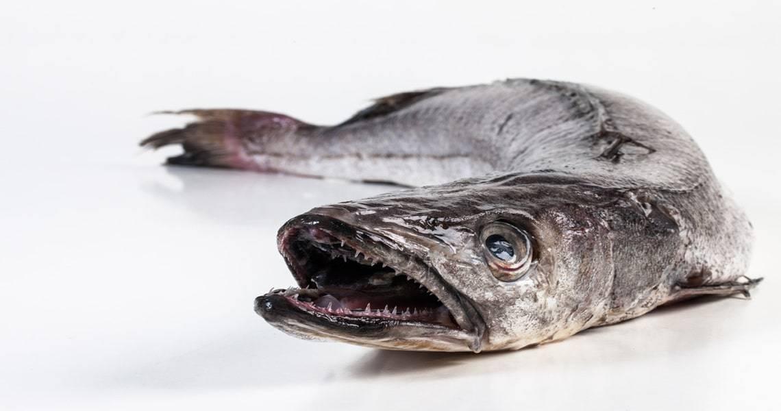 Рыбка хек — польза и особенности состава этого морепродукта. какой может быть вред от хека, как выбрать и приготовить полезную рыбку