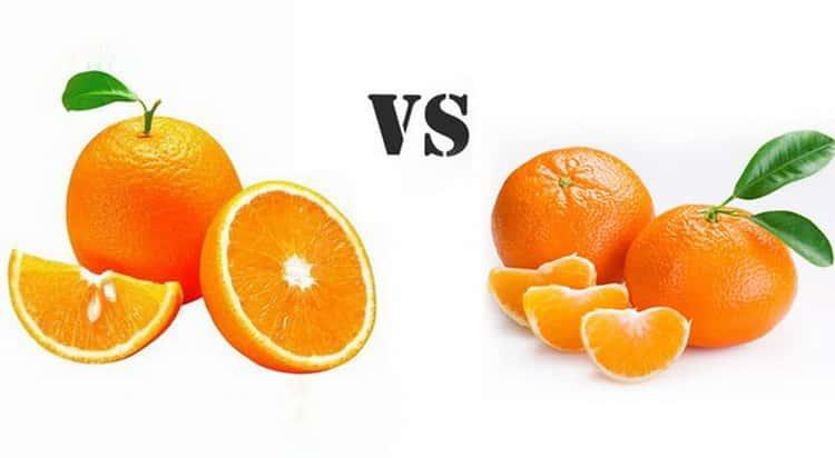 Апельсины, польза и вред для здоровья человека