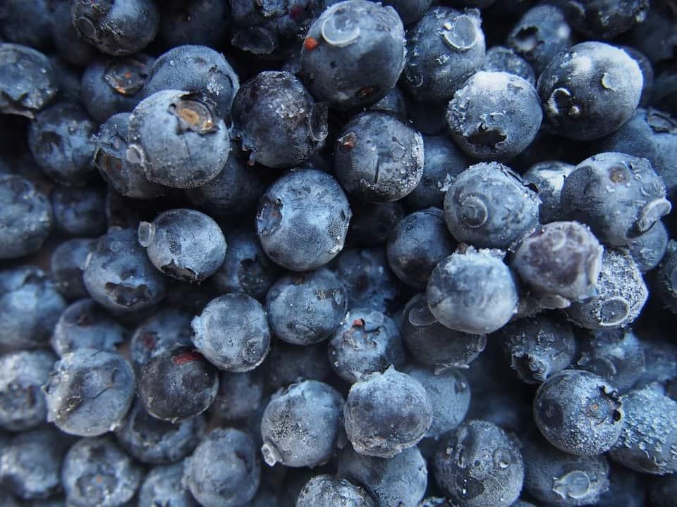 Особенности голубики: польза и вред для здоровья. какими свойствами обладает ягода, где её собирать и как применять