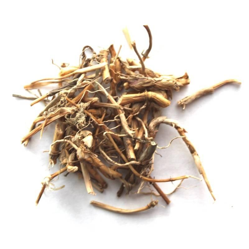 «огонь полей» — лечебные свойства и противопоказания пырея ползучего