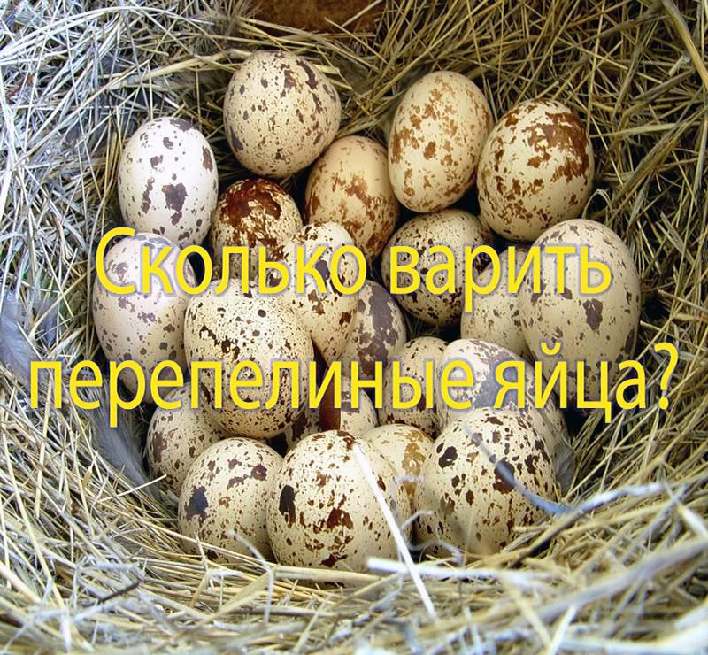 Сколько варить перепелиные яйца всмятку после закипания
