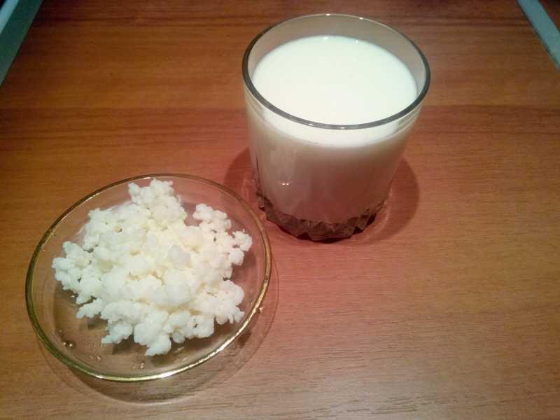 Молочный гриб: польза и вред для здоровья человека