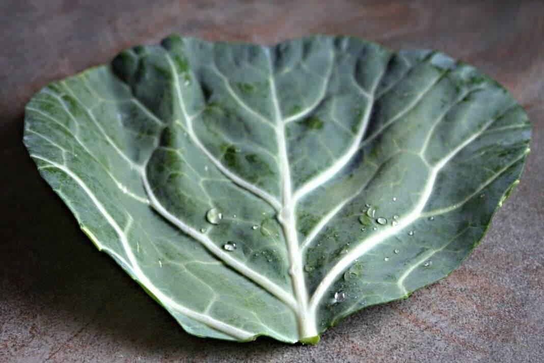 Основные целебные свойства капустных листьев
