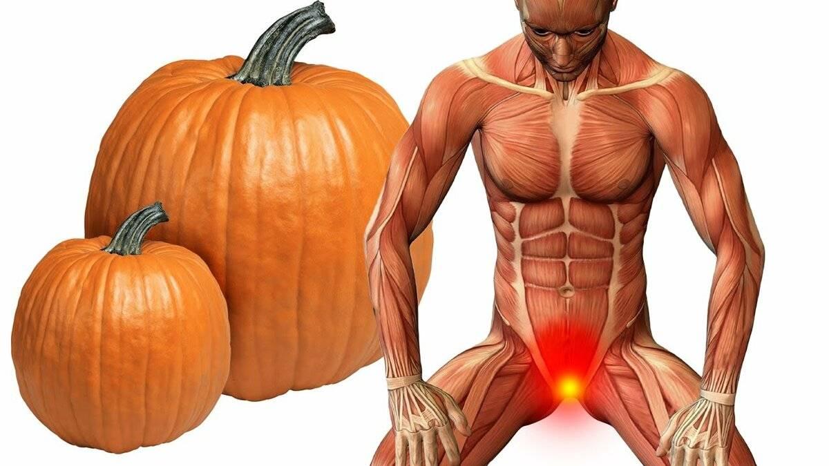 Польза и вред тыквы для организма, сколько нужно есть