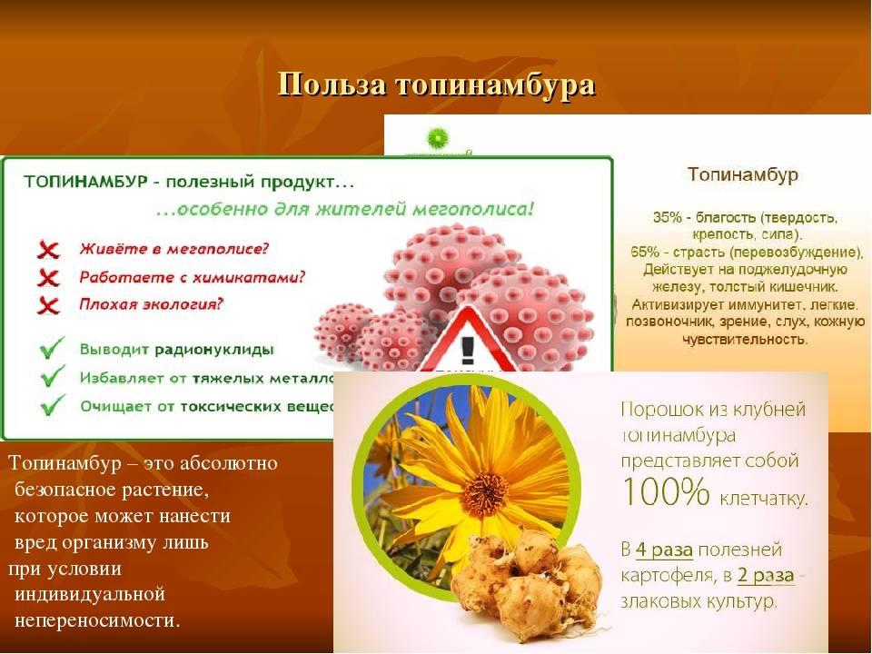 Безвременник осенний: лечебные свойства