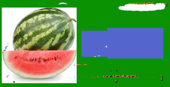 Какая польза от арбуза для организма человека