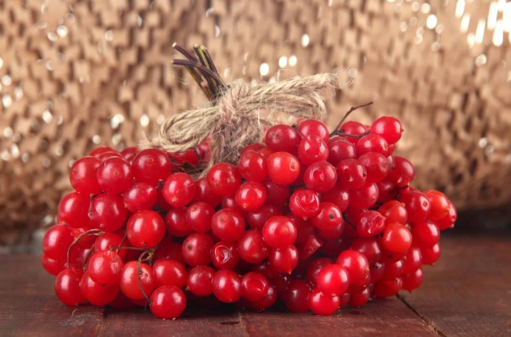 Польза листьев рябины красной. красная, черная рябина: польза и вред для здоровья