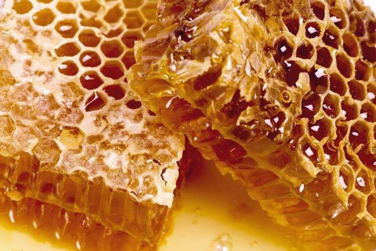 Польза и вред меда в сотах: можно ли глотать воск, что будет, если его съесть?