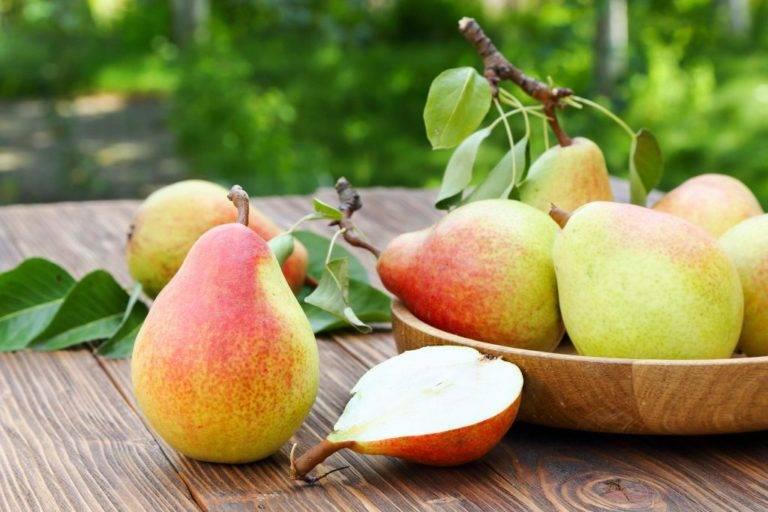 Чем полезна груша для организма?