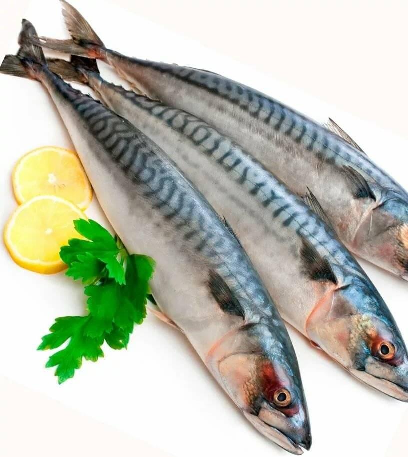 Самая полезная рыба: какие сорта самые ценные для женщин, мужчин и детей, как выбрать рыбу