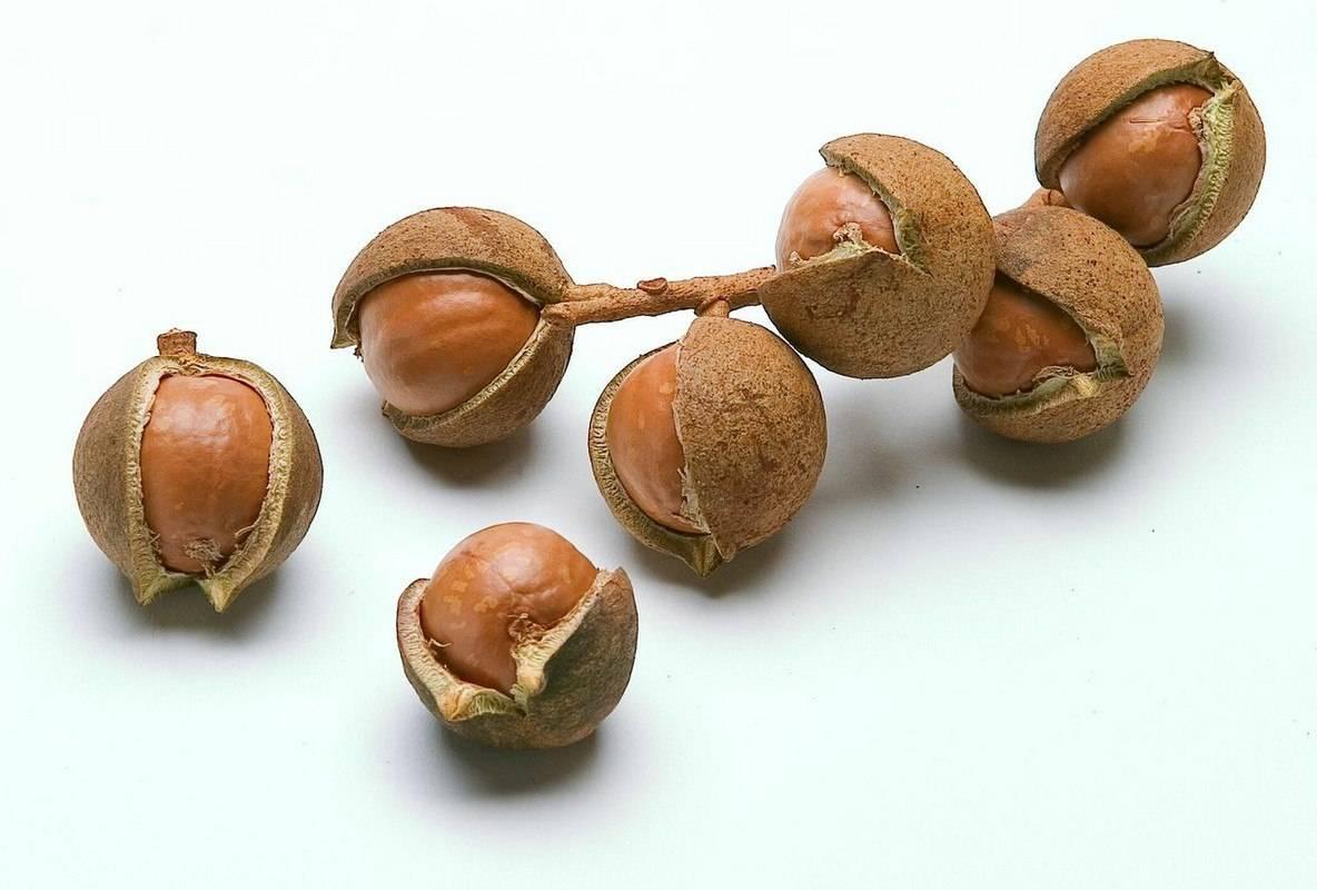 Орех макадамия – чем полезен и вреден для женщин? химический состав, рецепты и рекомендации