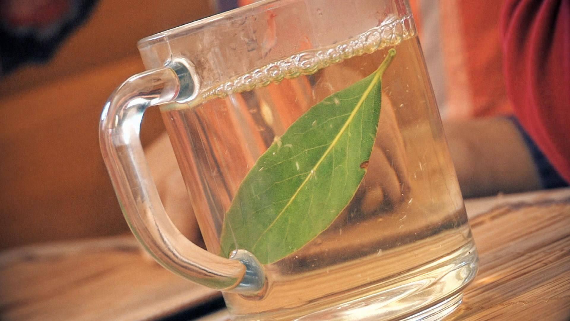 Лечение лавровым листом — лучшие эффективные проверенные рецепты, свойства и противопоказания к применению лаврового листа (95 фото)