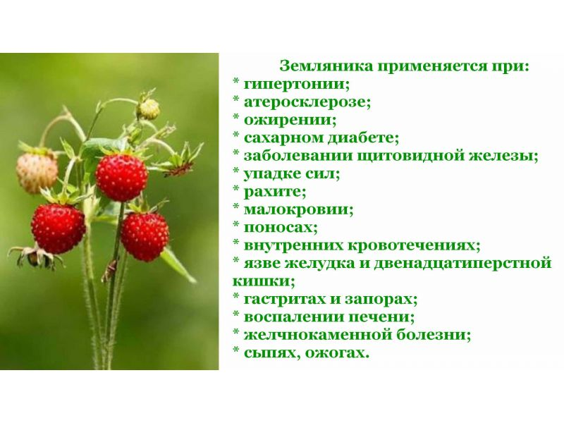 Полезные свойства и вред от употребления листьев лесной земляники