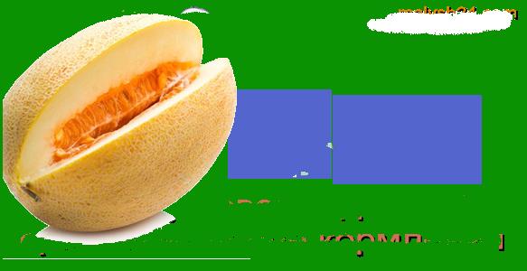 Сушёная дыня — калорийность, польза и вред, лучшие рецепты заготовки