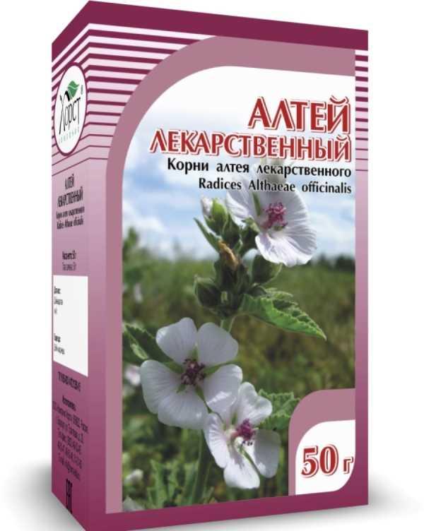 Корень алтея: лечебные свойства и противопоказания
