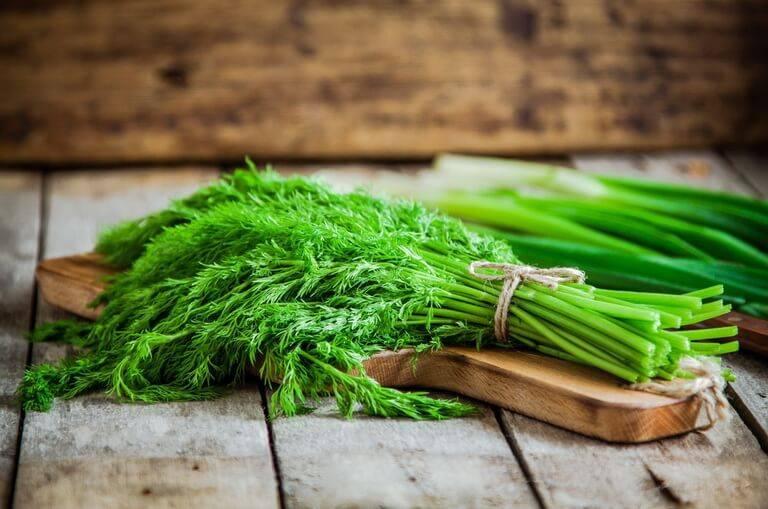 Укроп — польза и вред для здоровья организма