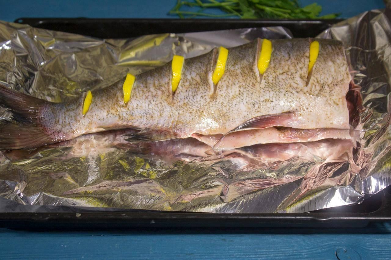 Чем питается толстолобик в природе. разведение и размножение толстолобика