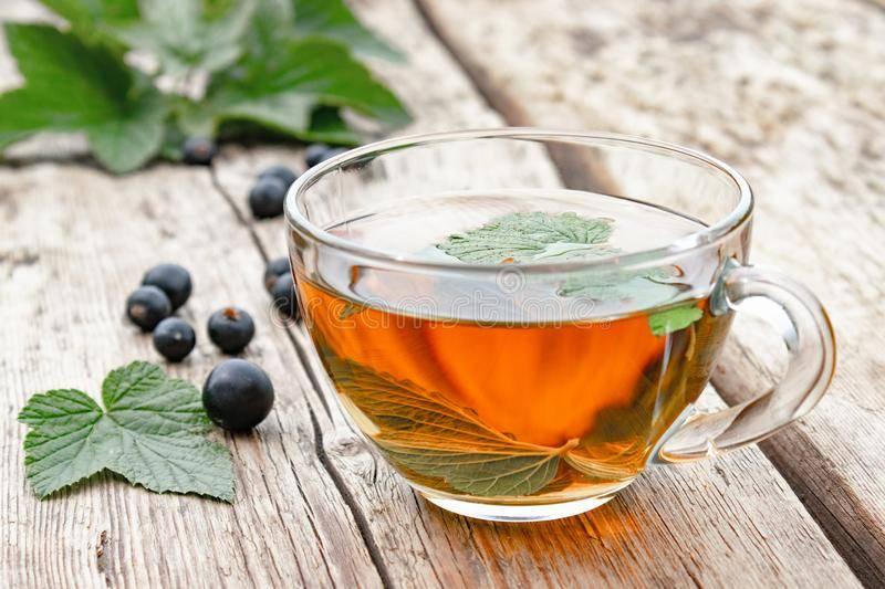 Приготовление чая из листьев смородины, польза и вред напитка