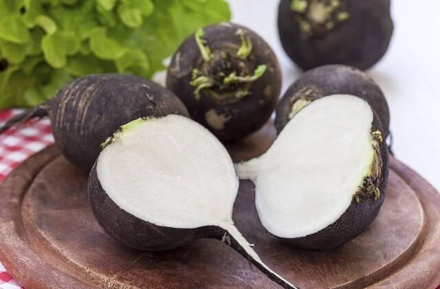 Чем полезна редька зеленая, черная и белая для организма