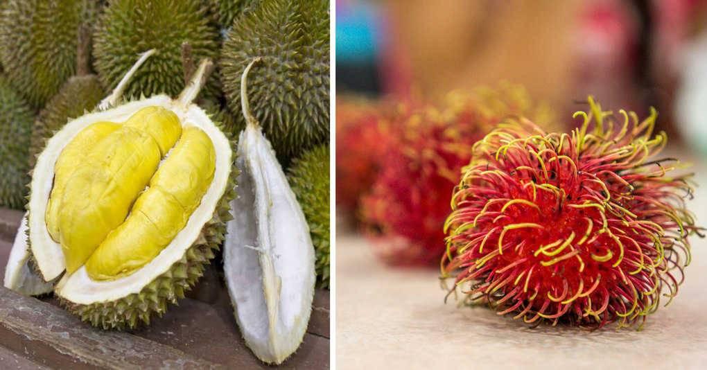 Кумкват – это что за фрукт, фото, польза и вред