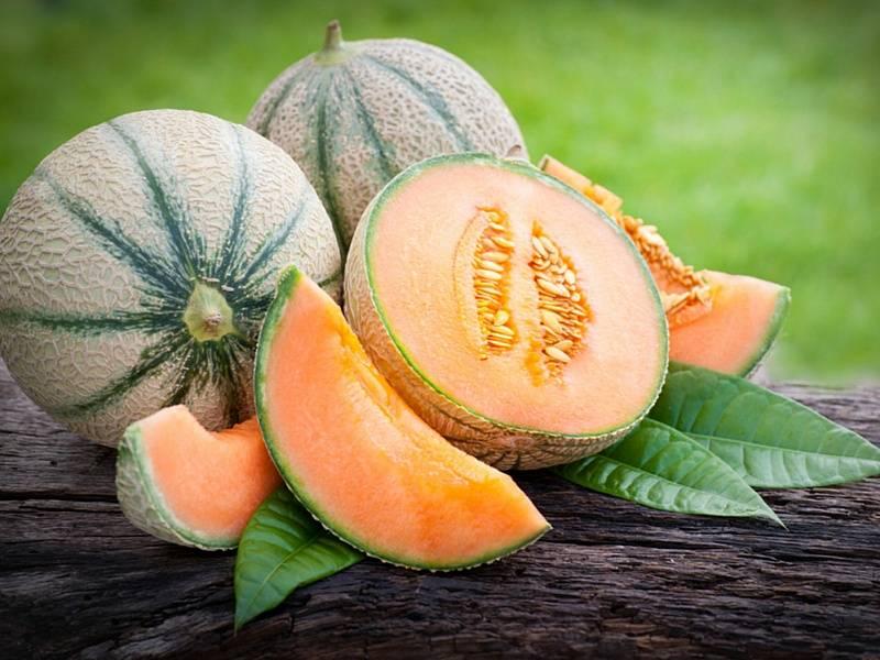 Лучшие сорта и особенности выращивания дыни канталупы