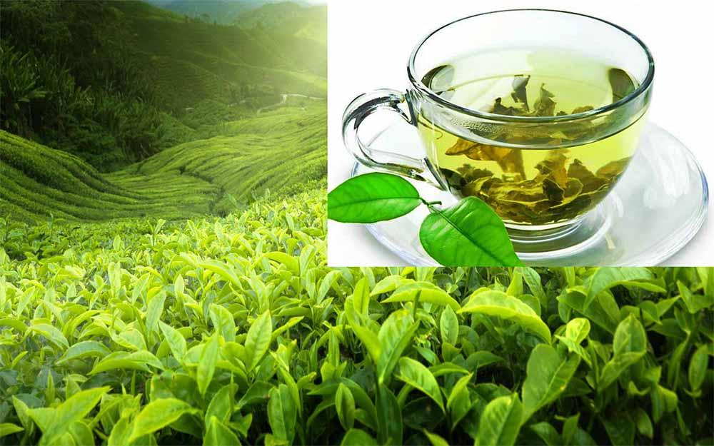 Что такое чай с бергамотом, полезные свойства, вред