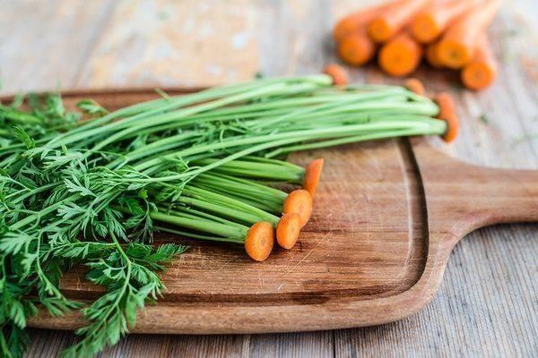 Морковная ботва: заготовка, хранение, лечебные и полезные свойства, рецепты, как принимать