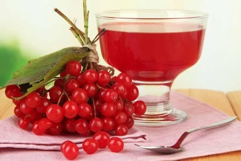 Полезные свойства и приготовление чая с калиной