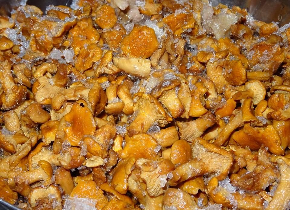 Сырые грибы лисички – вкуснятина! можно ли есть сырые лисички? польза и вред для человека