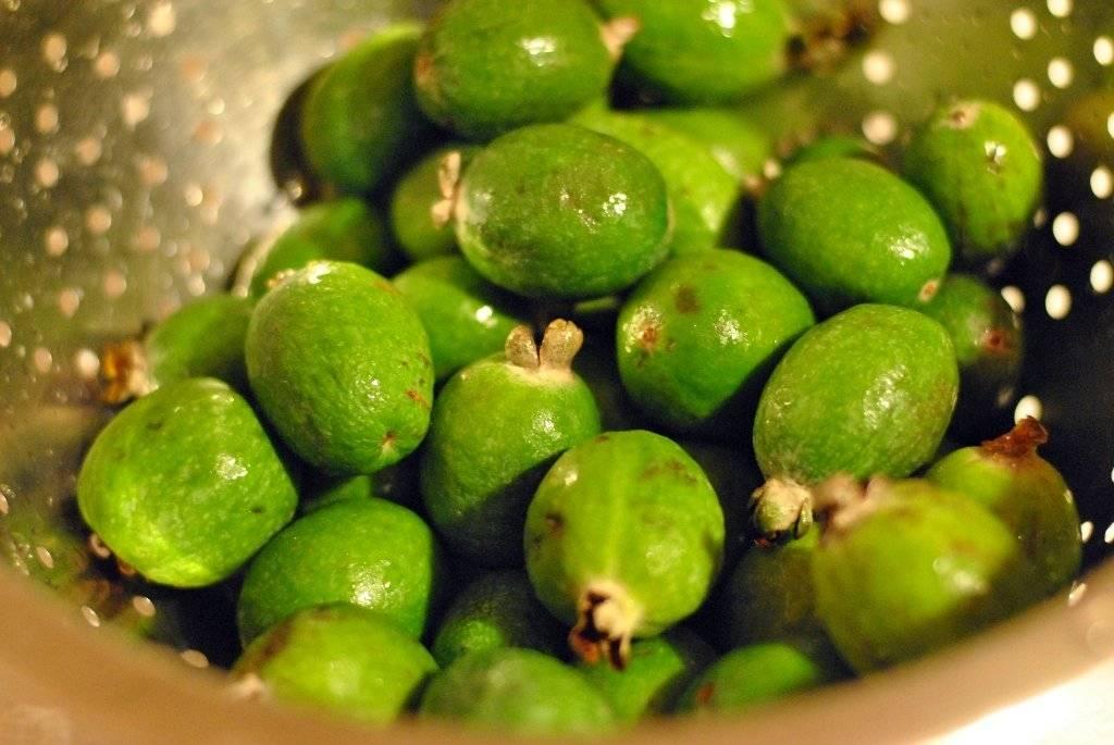 Фейхоа фрукт: фото, описание, как выбрать и как есть, вкусные рецепты