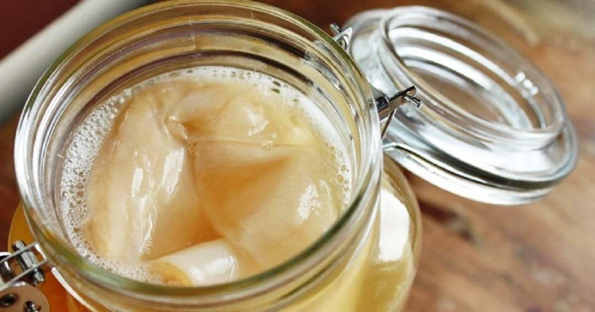 Чайный гриб: полезные свойства, противопоказания, польза и вред