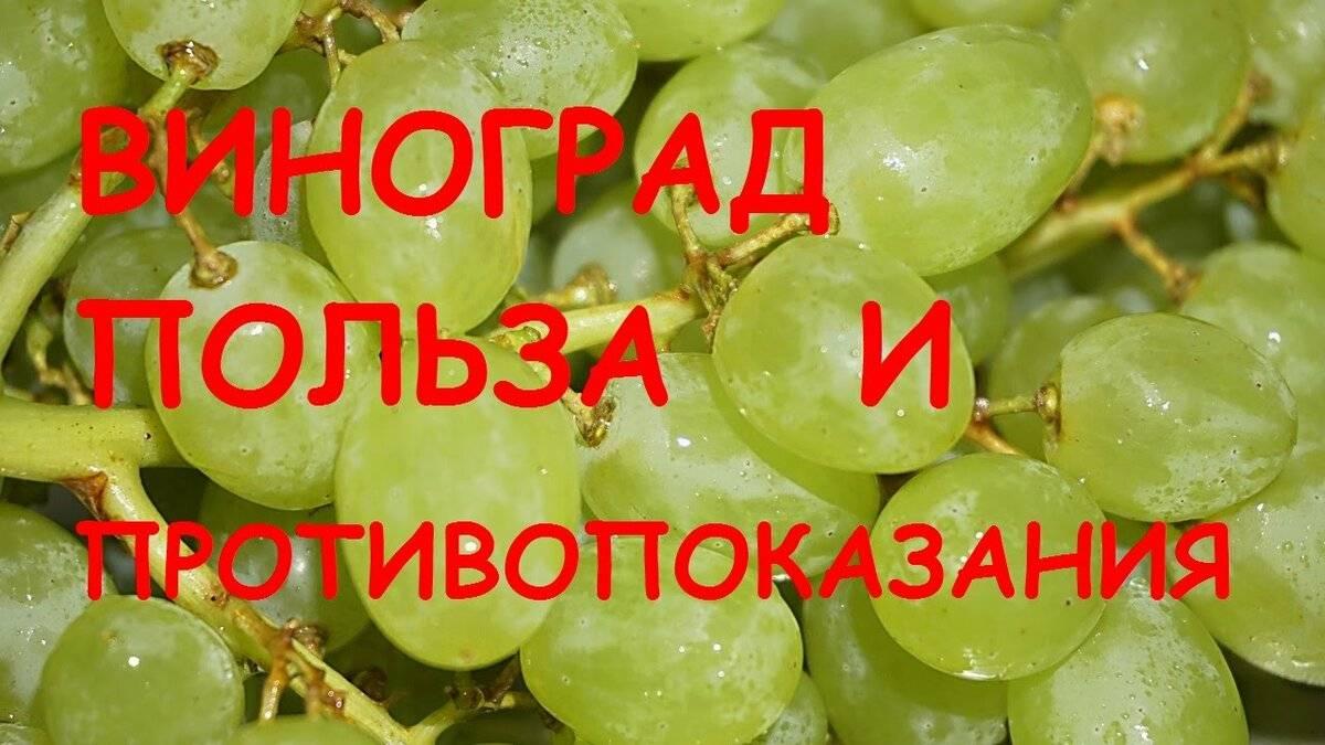 Виноград польза и вред для организма человека