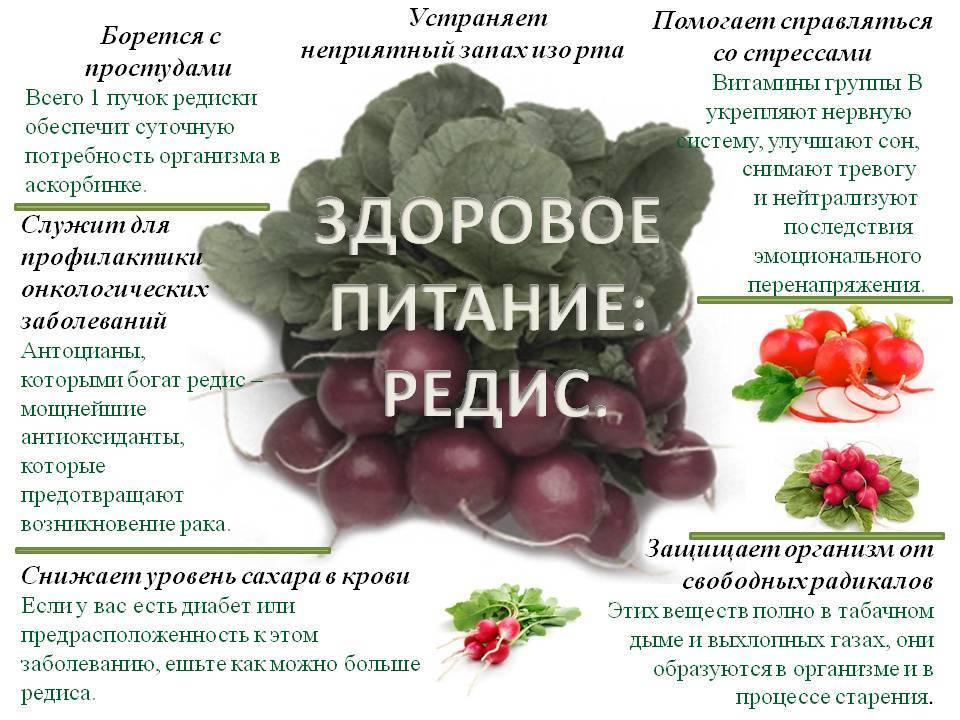Редиска: сколько можно съедать, польза и вред для организма