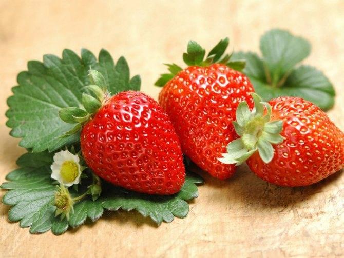 Чудо-ягода земляника: польза для красоты и здоровья