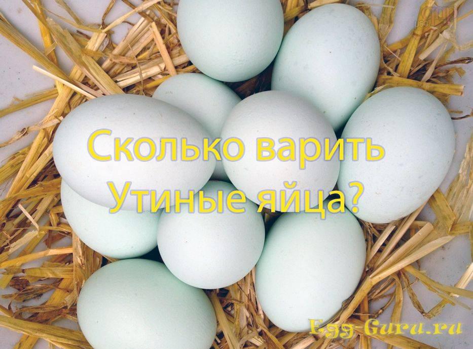 Утиные яйца: их полезные свойства и противопоказания