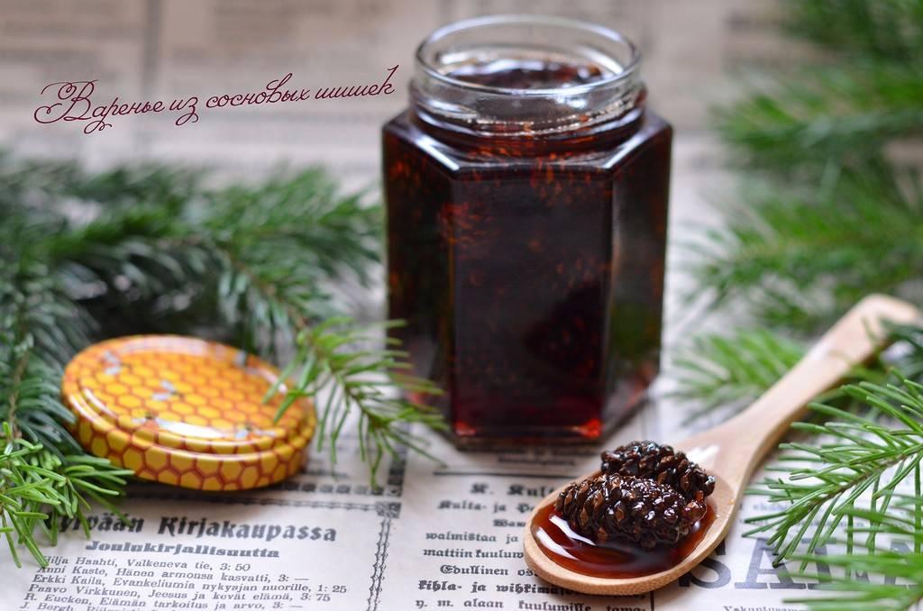 Варенье из сосновых шишек: польза и вред, рецепт приготовления