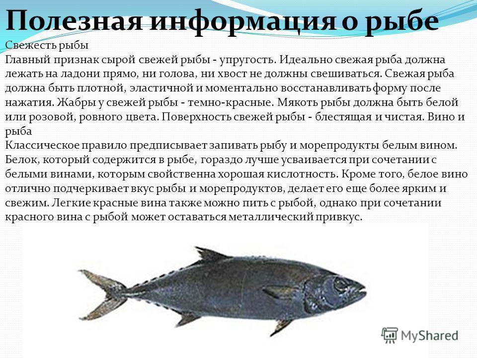 Молоки лососевых рыб: полезные свойства и вред
